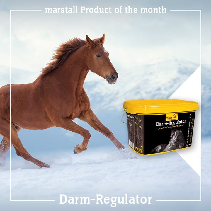 Darm-Regulator - The triple formula to combat watery droppings